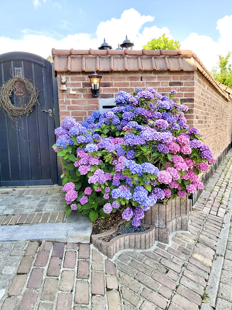 Hortensiastruik zwarte tuinpoort met takken krans