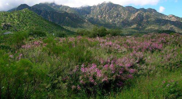 Madera Canyon verdure, monsoon season.