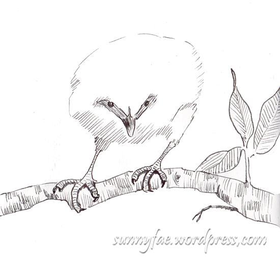bali a myna bird sketch