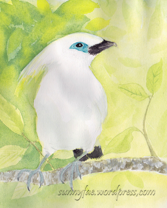 bali a myna bird watercolour sketch