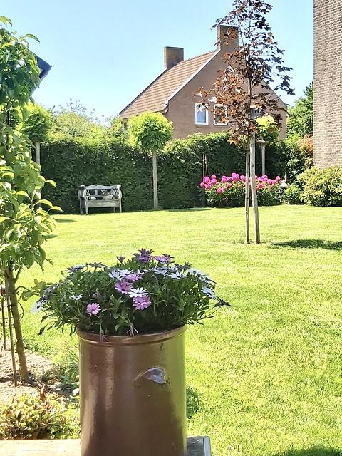 Groene tuin met gazon Keulse pot met paarse bloemen brocante tuinbankje