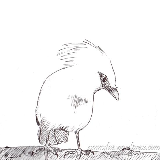 sketch of bali a myna bird