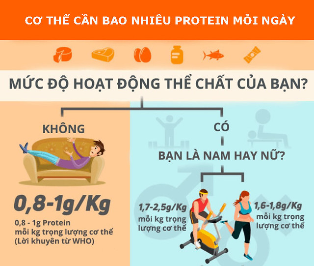 co-the-can-bao-nhieu-protein-moi-ngay