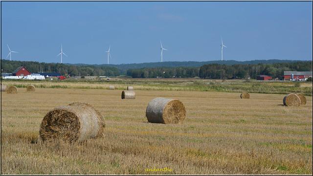 Countryside (4)