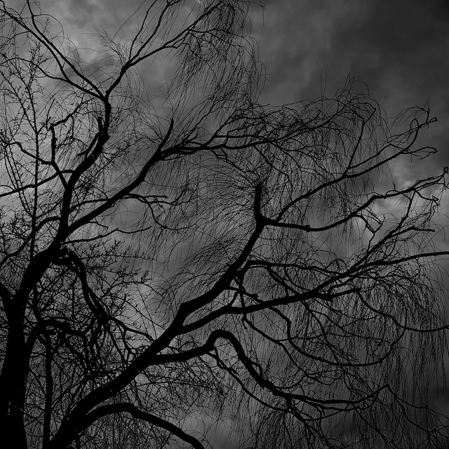 Branches in the wind