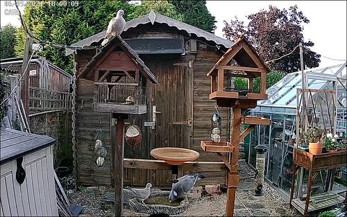 Bird Feeders 2021-09-07