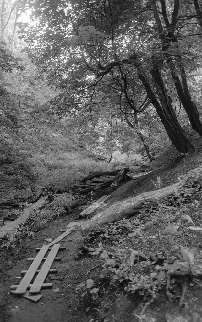 Path Along Williamson Ravine