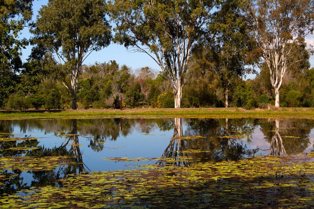 Reflections - Yowie Park Lagoon, Kilcoy, Queensland
