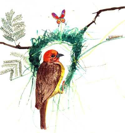 wp-weaver-bird4_23253313_o