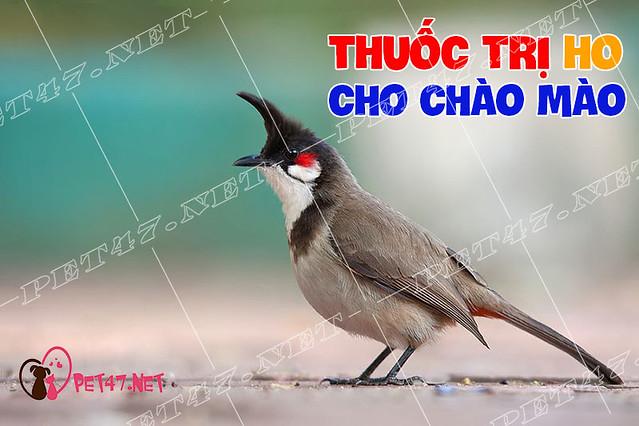 Một số loại thuốc trị ho cho chim chào mào siêu tốc