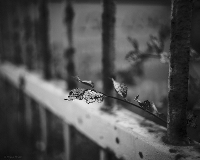 Life behind the fence