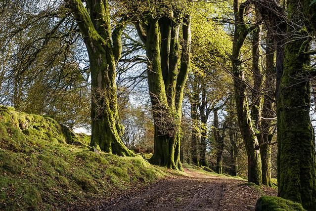 Mossy Trees - NK2_4792