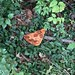 A #Pizza #Party in the #Woods, 2 - h