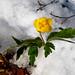 Winter in Bukovets