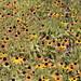 Lansing, Michigan - Flowers at Hawk Island Park
