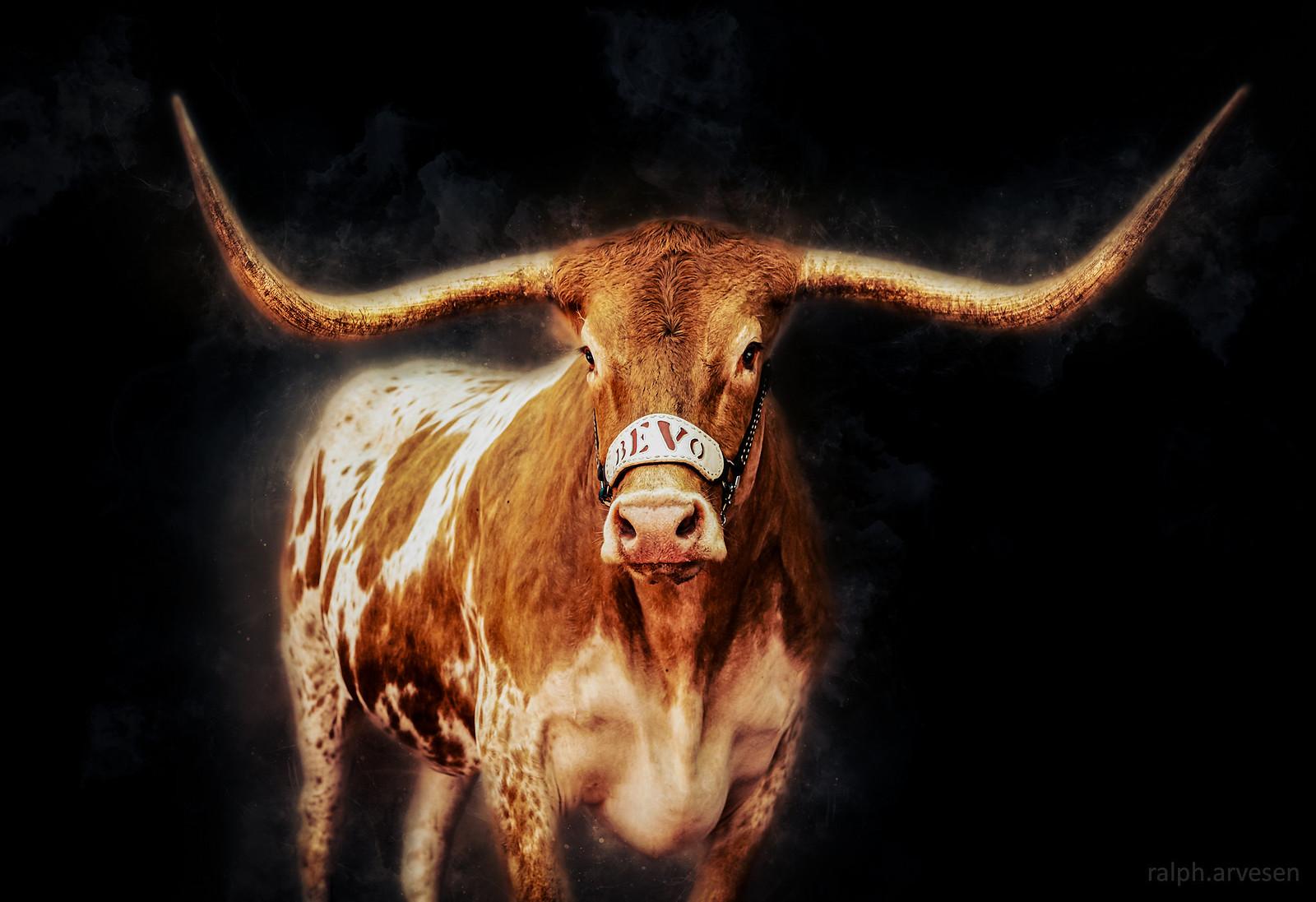 Longhorn Hellraisers | Texas Review | Ralph Arvesen