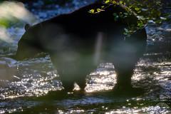 Fishing Bear 1