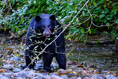 Fishing Bear 3