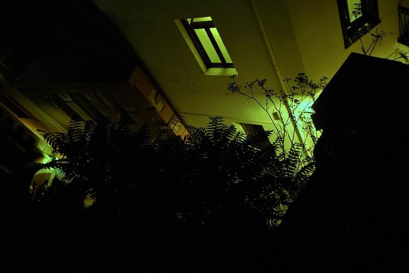 зелёной ночью папоротник чёрный