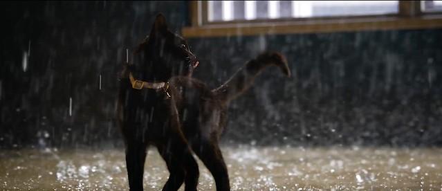 Matrix Ressurections Cat