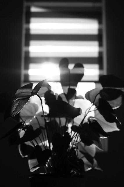 flower shadow.jpg