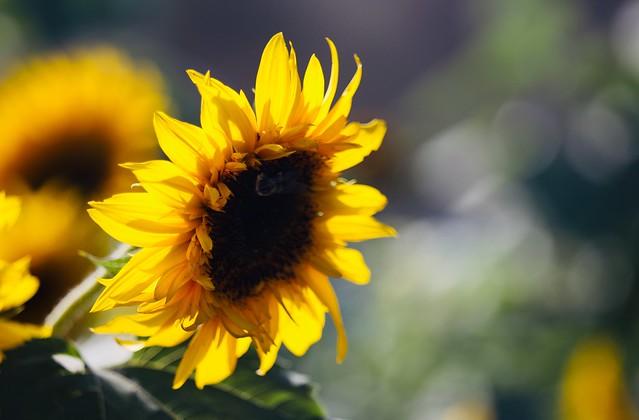 The garden's sun