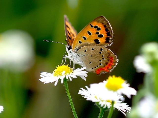 OMD EM1 9.8.2021 butterfly  1