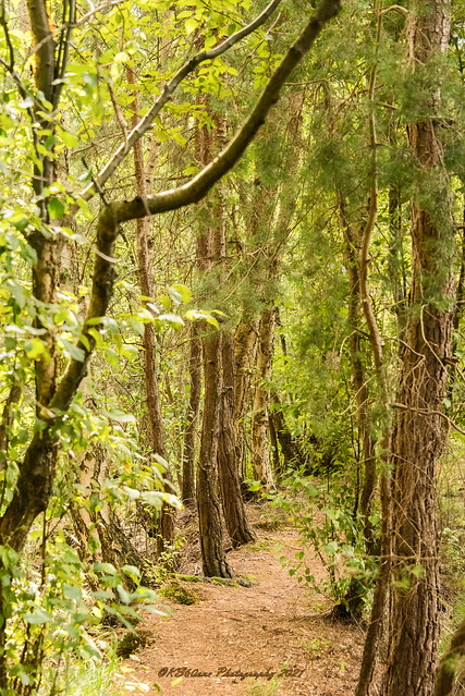 ... jungle path feeling  / Dschungelpfad-Feeling / 01022 ...