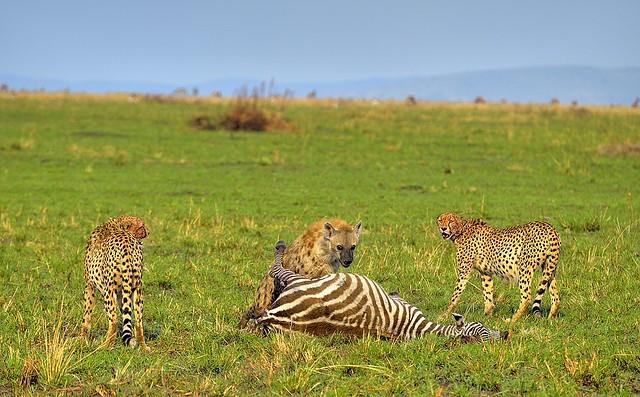 Kenya, unforeseen guest