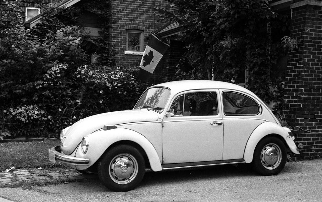 Canadian Beetle_