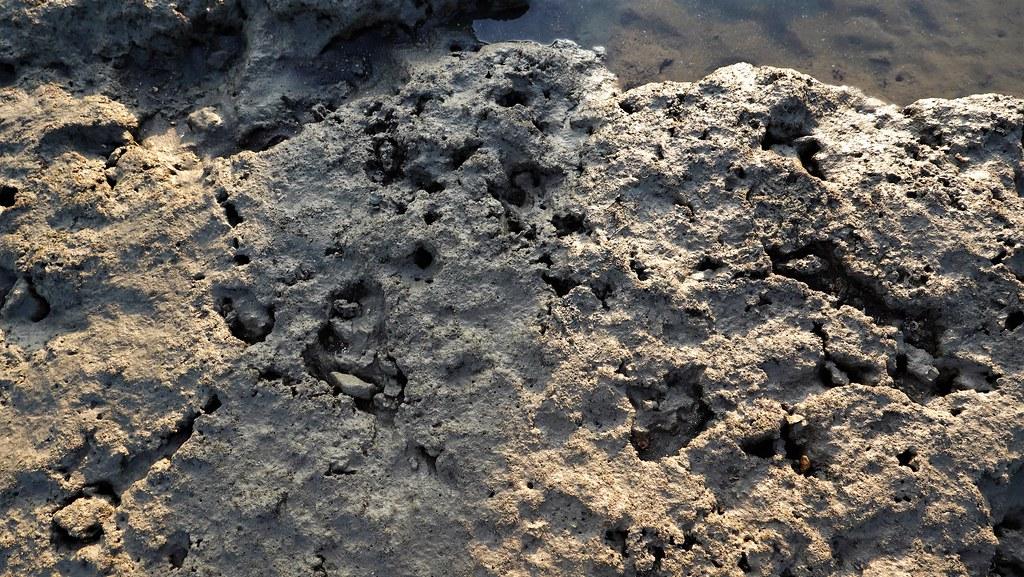 藻礁沙埋狀況。孫文臨攝