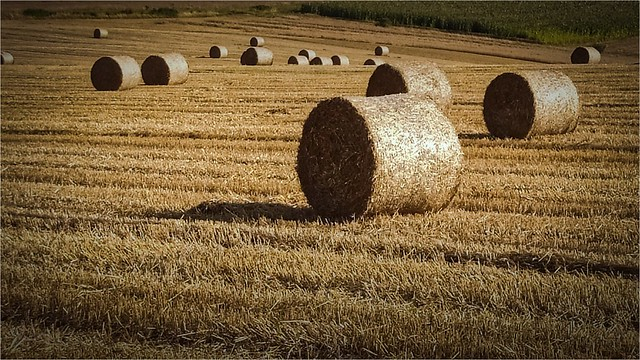 Landscape... Poland