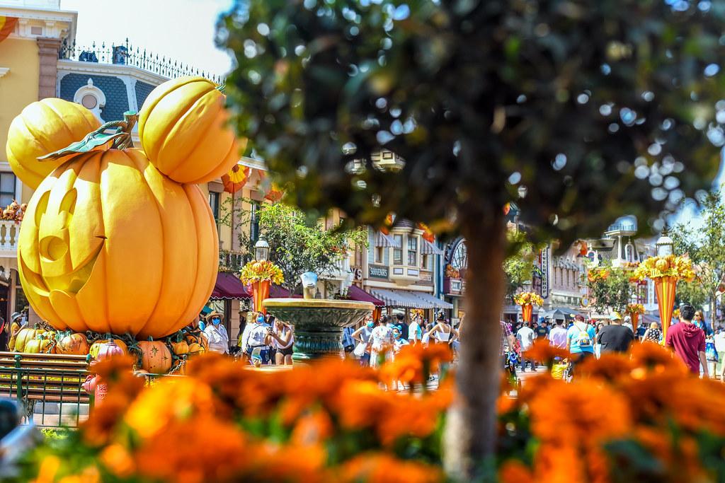 Pumpkin Mickey orange flowers DL