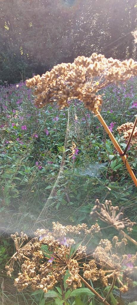 Morgendunst und Spinnweben