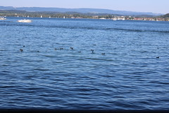 Bodensee-130