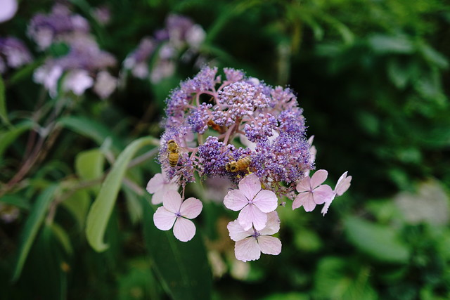 Flower and bees