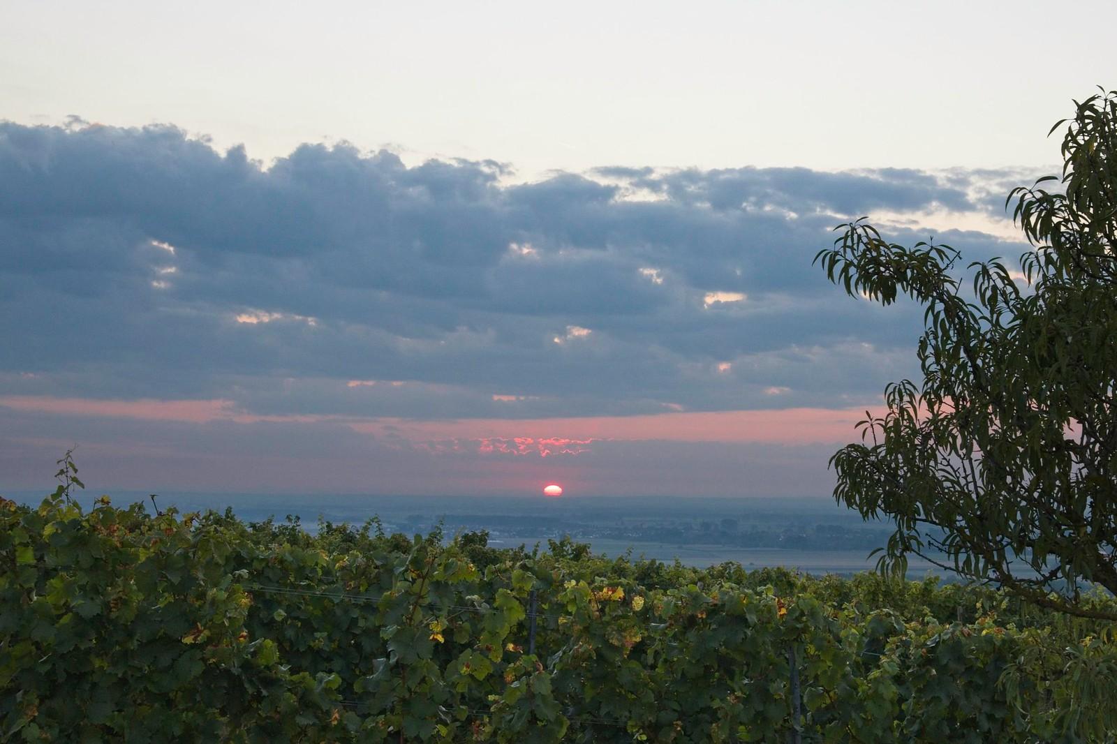 Sonnenaufgang am Niersteiner Wartturm