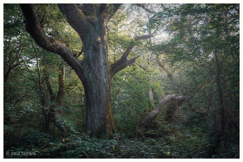 Abbotts wood. E.sx