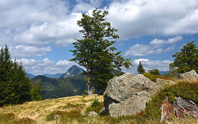 Big beech tree on Kašna planina