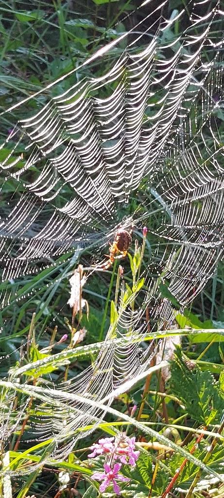Morgentau an den Spinnweben eines Spinnennetzes.