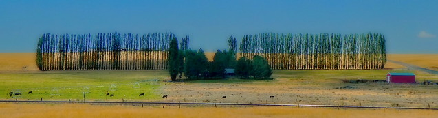 Countryside panorama - in the manner of and in homage to Wes Anderson