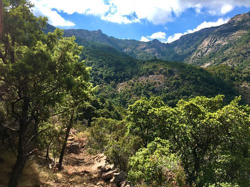 Vallée du Finicione vers l'amont et le Castedducciu