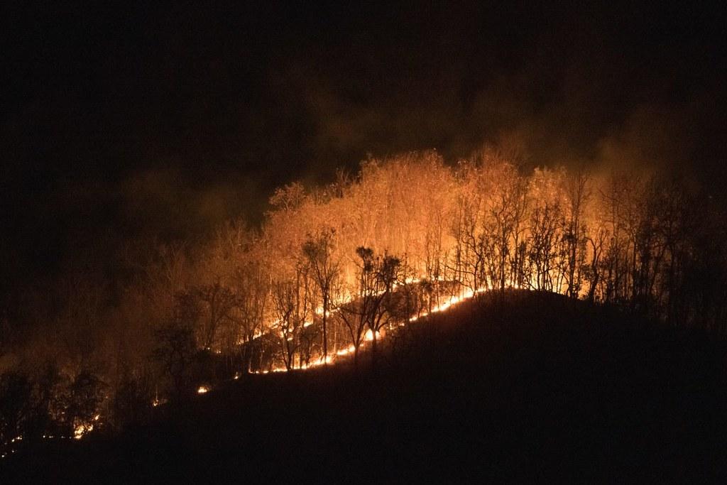 乾季森林野火燒過森林下層,且對位於泰北的綠孔雀棲地而言,火勢難以控制。圖片來源:Ghan Saridnirun