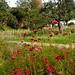 Spätsommerblumen  und -blüten