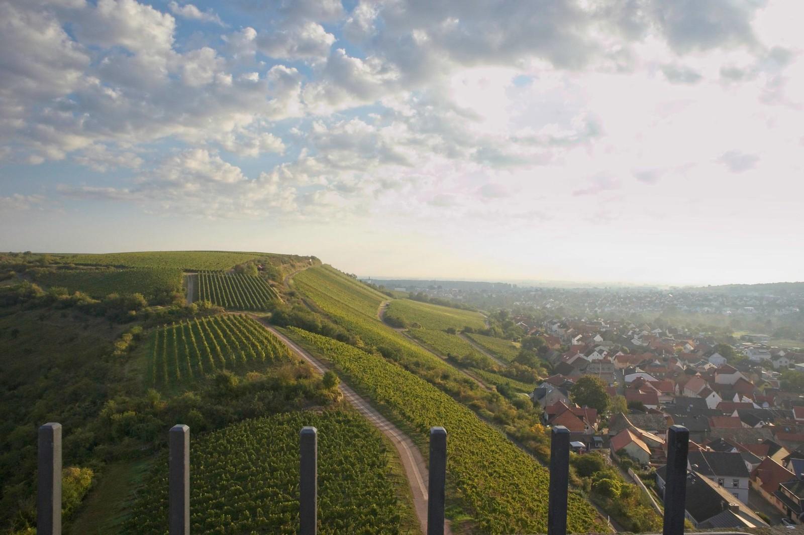 Blick von der Schwabsburg zum Roten Hang und zum Rhein