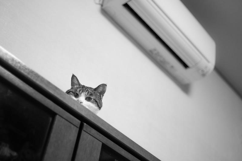Someone's watching.