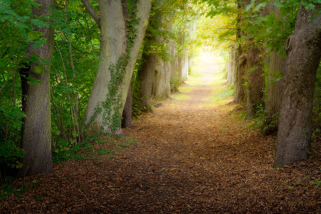 The path to the elven kingdom is open to you now...