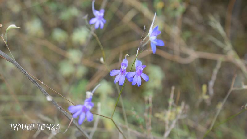 Растения Ростовской области