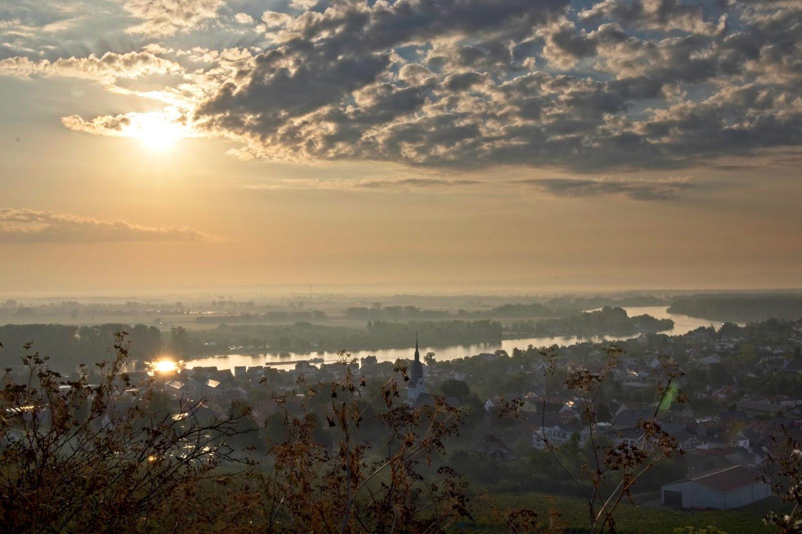 Morgensonne am Niersteiner Wartturm