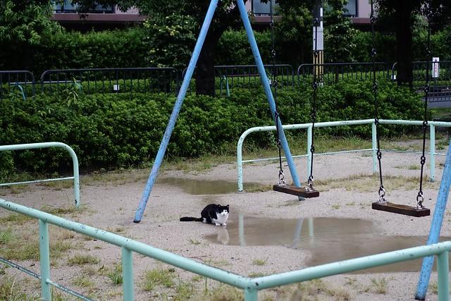 Today's Cat@2021−09−09